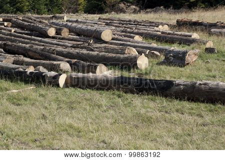Felled Timber In Logs