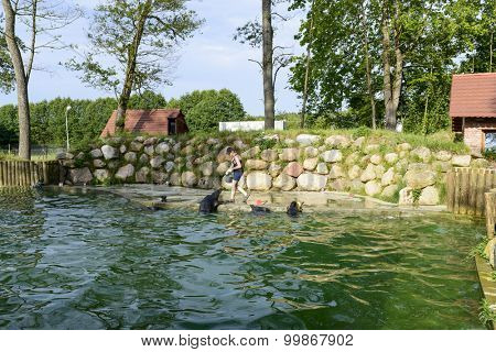 CHARLOTTA VALLEY - JULY 07: Public feeding the seals at Seal Centre on 7 July 2015 in Charlotta Valley near Ustka, Poland. The ceremony daily feeding of seals is required for the care of seals.