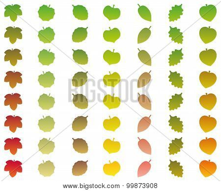 Leaves Color Change Grades Fall Green