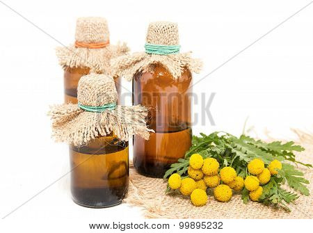 Medical Infusion Of Tansy