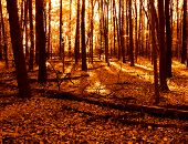 Warm Woods in Autumn