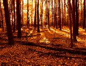 Warm Woods in Autumn