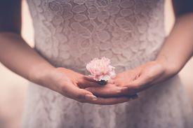 foto of carnation  - Close - JPG
