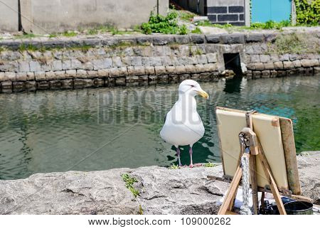 Seagull Standing Over The Otaru Canal.