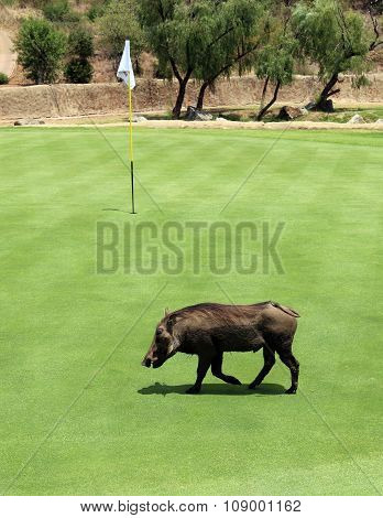 Uninvited Participant At Gary Player Charity Invitational Golf Tournament 2015