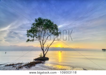 Sonneratia catch sunrise on deserted beach