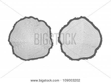 Rings Of Texture Of Wood. Tree Cut