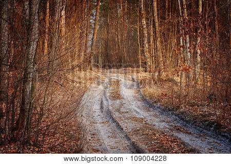 Dirt Road In Autumn Forest
