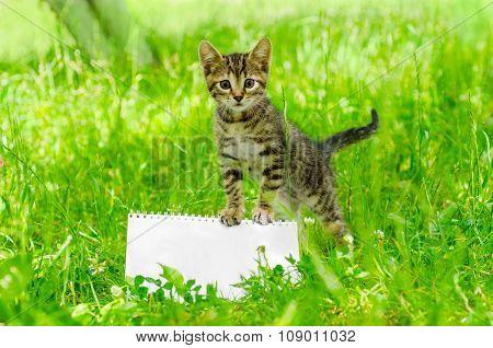 small kitten on grass