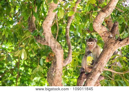 monkeys sit on the tree with bottle garbage.