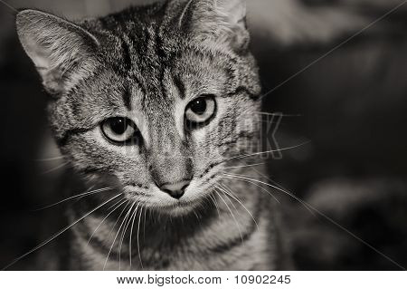 Cat in a cage looking out
