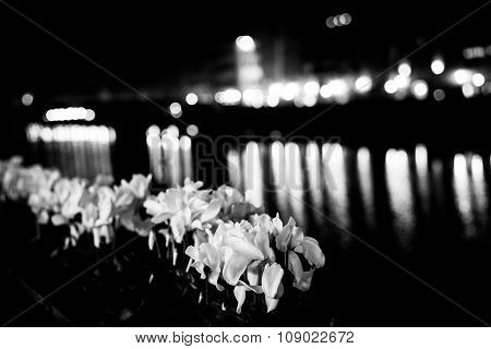 Flowers River Florence Mono