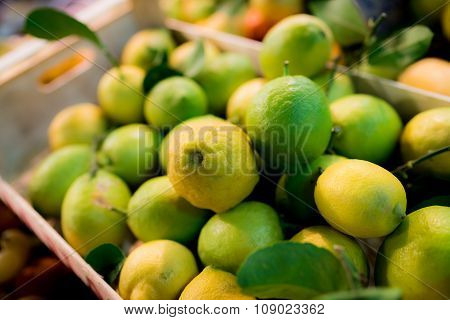 Limes In Florence
