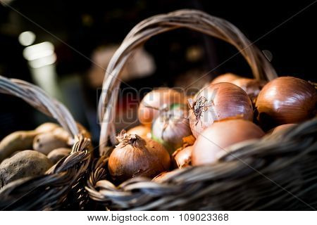 Onions In Florence