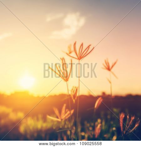 Abstract Blurred Wild Flower And Sunset With Vintage Filter Unfocused.