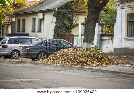 Big pile of autumn leaves by tree, cars, old houses