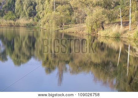 Calm lake water reflects sky, willow and birch trees