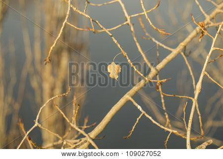 Last leaf on autumn tree branch, sunlit close-up
