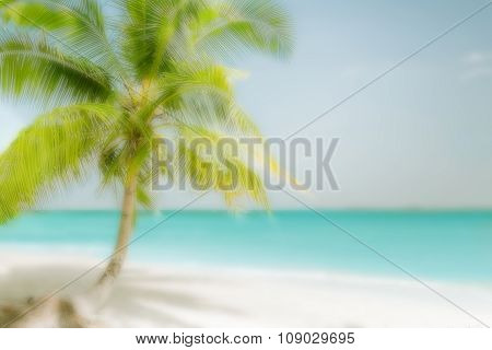 Blurred Travel Background With Palm At Tropical Beach
