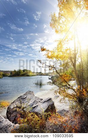 Landscape with rocks and trees on beach