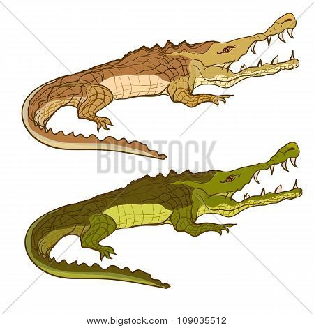 Crocodile green and brown. Vector cartoon image isolated