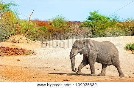 A lone elephant walking on the dusty plains