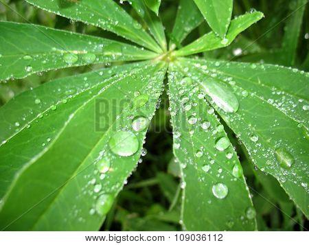 Green Leaf And Rain Drops