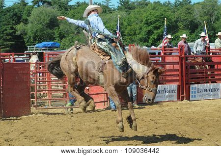 A Rodeo Cowboy Riding A Bucking Bronco