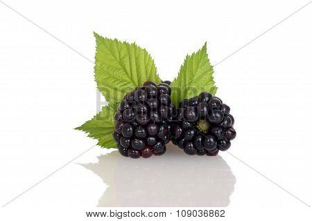 closeup blackberries with leaves