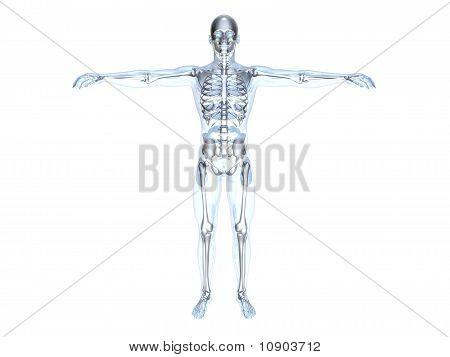 Anatomy - X-ray.