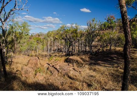 Bushland in the Undara Volcanic National Park, Qld., Australia