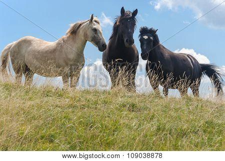 Three Horses On Mountain