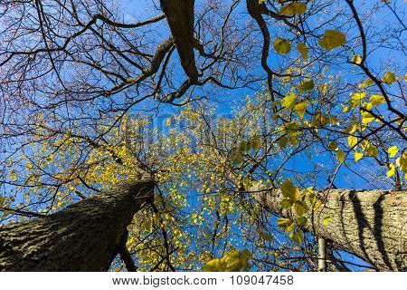 Late Fall Trees And Blue Sky