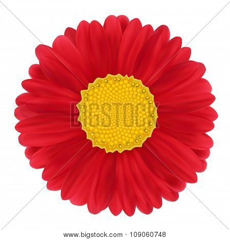 Red Gerbera, Flower.
