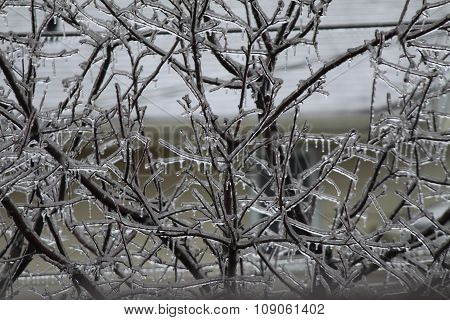 Ice Covered Tree Branch's