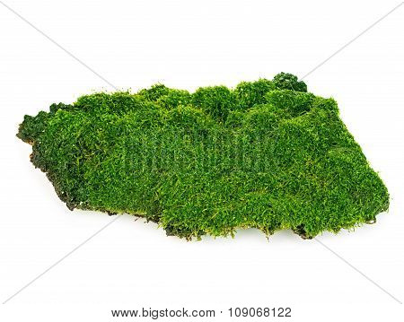 Beautiful Green Moss Close-up Isolated On A White Background.