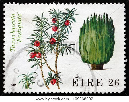 Postage Stamp Ireland 1984 Irish Yew, Conifer Tree