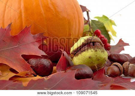 Cropped Shot Of Pumpkin With Autumn Leaves For Thanksgiving Day On White