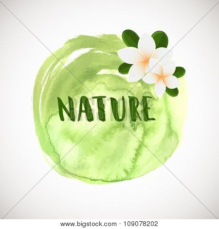 Vector white frangipani flowers. Plumeria flower on green watercolor background