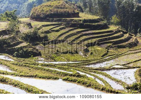 Rice terraces landscape in Sa Pa
