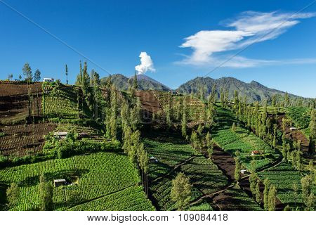 Vegetable crops on the hilly fields with an erupting Semeru volcano on background. Java, Indonesia