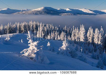 Christmas landscape. Fir forest in mountains. Sunny morning. Carpathians, Ukraine, Europe