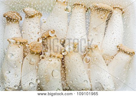 Water Drops Of Mushroom Background