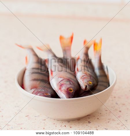 Freshwater River Perches In A Bowl, Uncooked