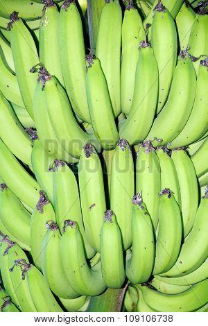 Green banana - Close up Green banana nature abstract