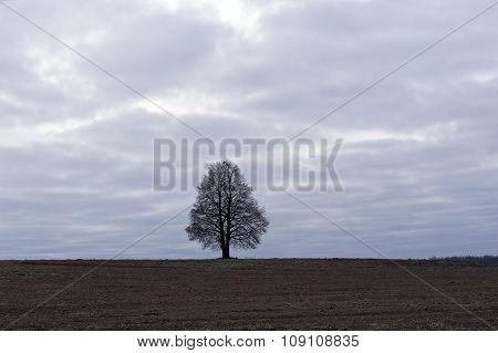 Soler Tree In Field