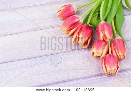 Red tulips over purple wooden table. Top view with copy space