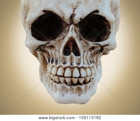 Skull And Texture