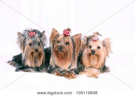 Many_Dogs