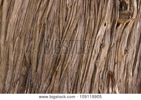 Wood vertical texture. Cracked juniper. Pine wood background.